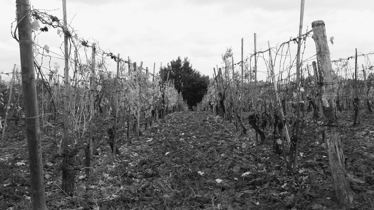 Il-vino-è-metafora-del-mondo